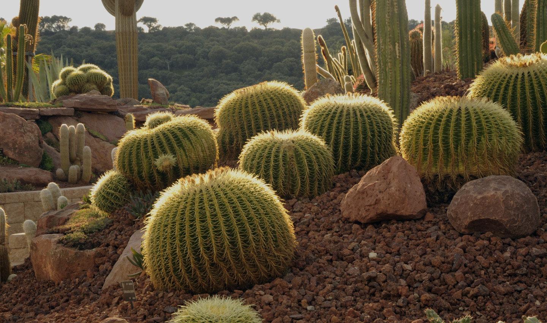 cabecera_desert-city